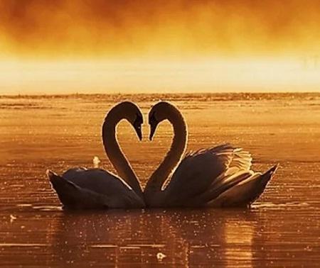 Какие знаки зодиака обречены на вечную любовь